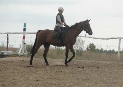 oboz-konie-2015-1-0051