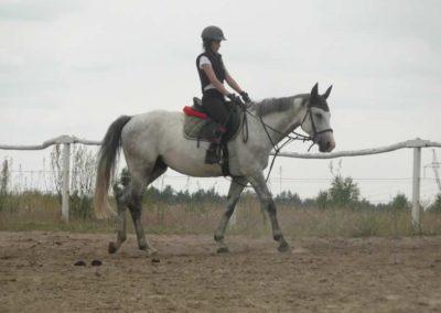 oboz-konie-2015-1-0052