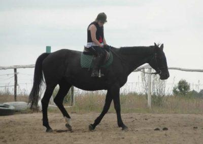 oboz-konie-2015-1-0053