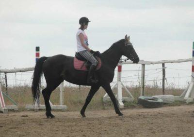 oboz-konie-2015-1-0055