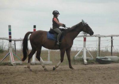 oboz-konie-2015-1-0056
