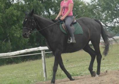 oboz-konie-2015-1-0068