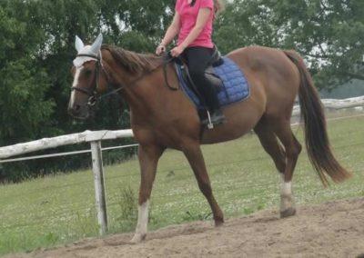 oboz-konie-2015-1-0069