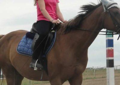 oboz-konie-2015-1-0073