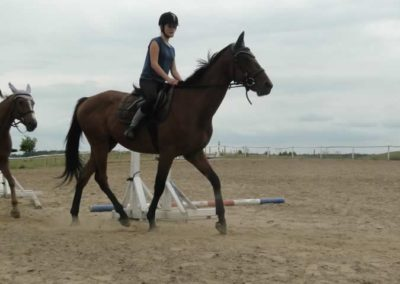 oboz-konie-2015-1-0077