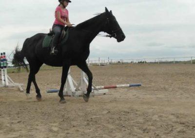 oboz-konie-2015-1-0078