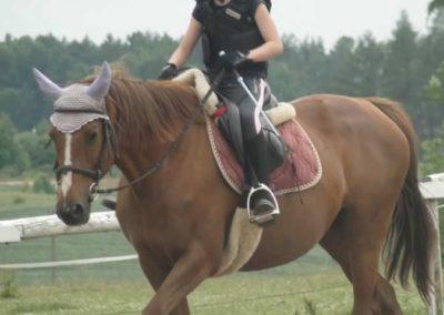 oboz-konie-2015-1-0106