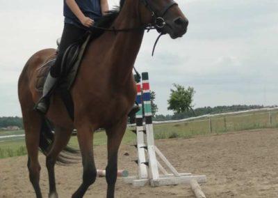 oboz-konie-2015-1-0108