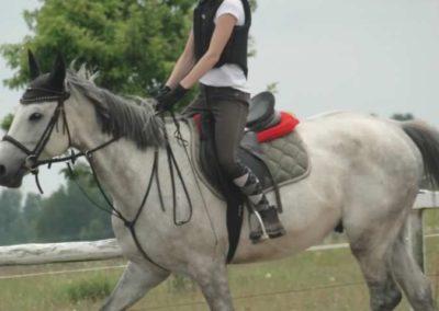 oboz-konie-2015-1-0111