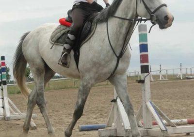oboz-konie-2015-1-0113