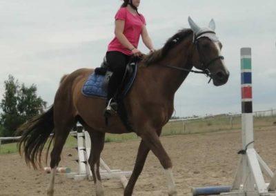 oboz-konie-2015-1-0114