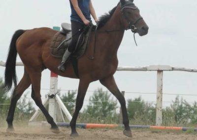 oboz-konie-2015-1-0117