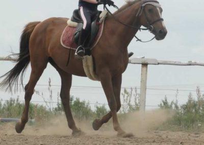 oboz-konie-2015-1-0118