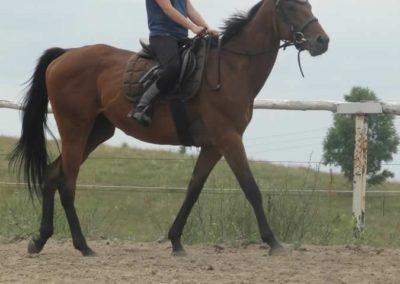 oboz-konie-2015-1-0119