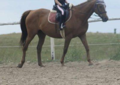 oboz-konie-2015-1-0120