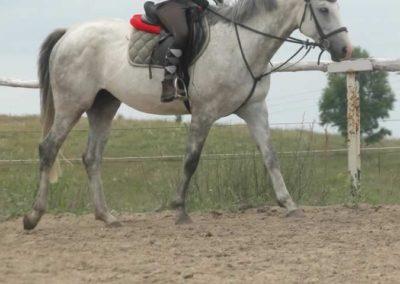 oboz-konie-2015-1-0121