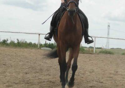 oboz-konie-2015-1-0124