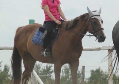 oboz-konie-2015-1-0126