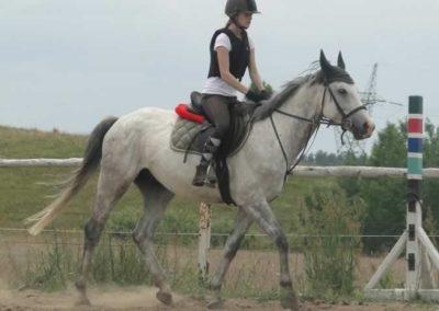 oboz-konie-2015-1-0131