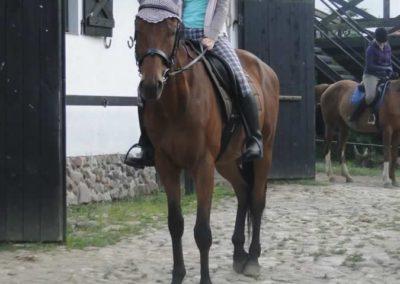 oboz-konie-2015-1-0133