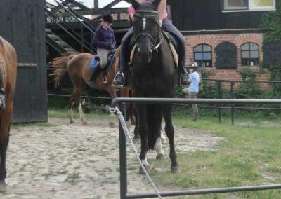 oboz-konie-2015-1-0134