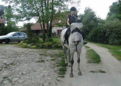 oboz-konie-2015-1-0138