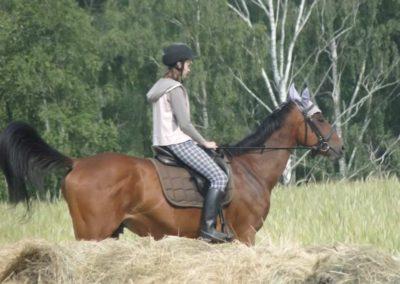 oboz-konie-2015-1-0152