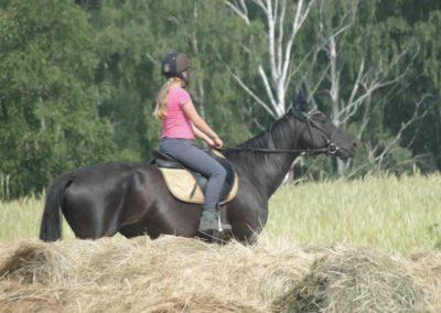 oboz-konie-2015-1-0153