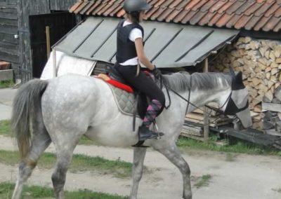 oboz-konie-2015-1-0167