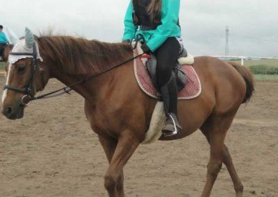 oboz-konie-2015-2-0010