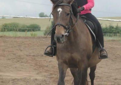 oboz-konie-2015-2-0011
