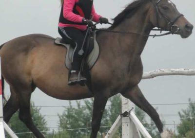 oboz-konie-2015-2-0015