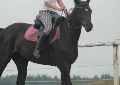 oboz-konie-2015-2-0017