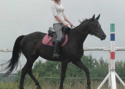oboz-konie-2015-2-0022