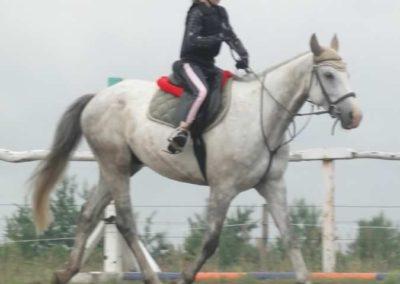 oboz-konie-2015-2-0023