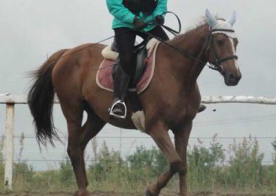 oboz-konie-2015-2-0024