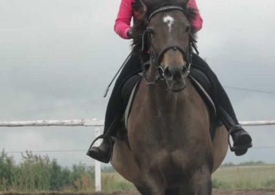 oboz-konie-2015-2-0025