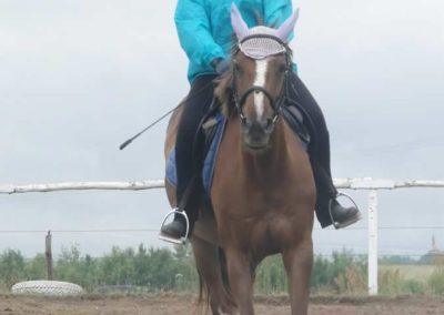 oboz-konie-2015-2-0026