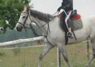 oboz-konie-2015-2-0030