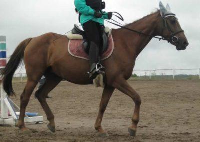 oboz-konie-2015-2-0031