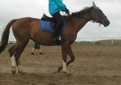 oboz-konie-2015-2-0032