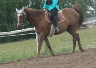 oboz-konie-2015-2-0035