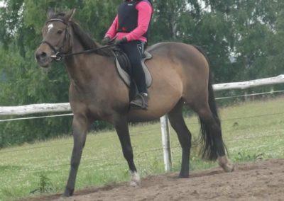 oboz-konie-2015-2-0036