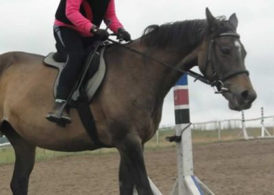 oboz-konie-2015-2-0039