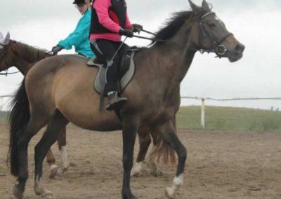 oboz-konie-2015-2-0040