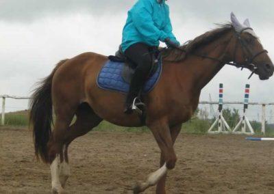 oboz-konie-2015-2-0041