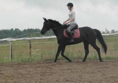 oboz-konie-2015-2-0042