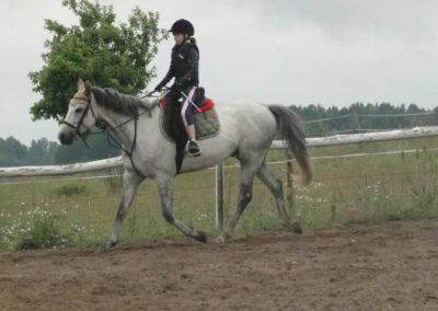 oboz-konie-2015-2-0043