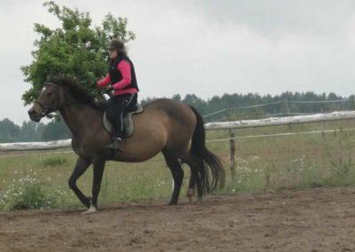 oboz-konie-2015-2-0044