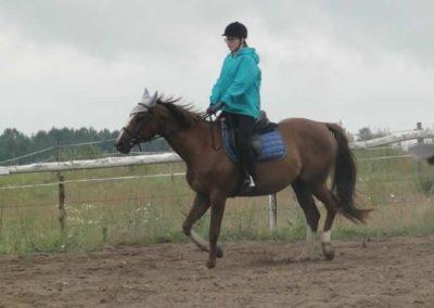 oboz-konie-2015-2-0045